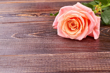 Pink rose on brown wooden background. Delicate flower on textured wood and copy space. Happy Birthday flower.