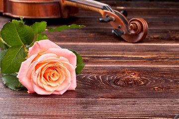 Pink rose and violin on wooden background. Fresh rose with green leaves and musical instrument on textured wood with copy space, horizontal image.