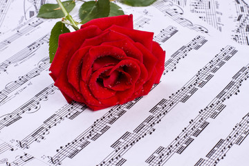 Rose with dew on musical sheets. Musical notes with red rose background.