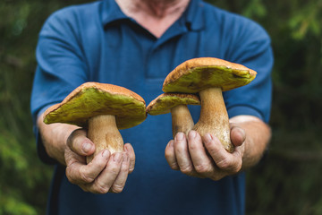 Man holding a beautiful edible mushrooms in his hands.