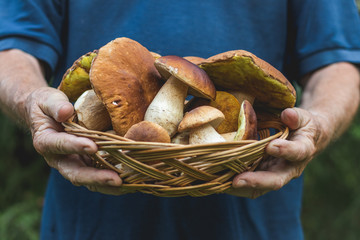 Man holding a wicker basket full of beautiful edible mushrooms in his hands.
