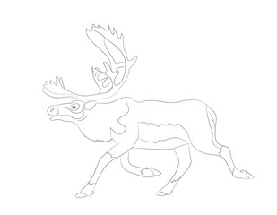 deer running, vector lines