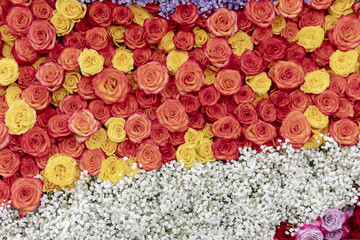 Red, orange and yellow roses background.