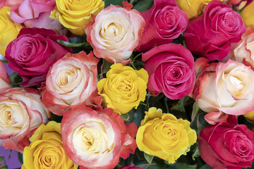 Pink, yellow,  red and orange roses.
