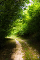 A path in the woods, the path is lighted and the trees are enlightened