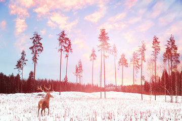Fototapete - Lonely noble deer mail with big horns against winter fairy forest at sunset. Winter Christmas holiday image.