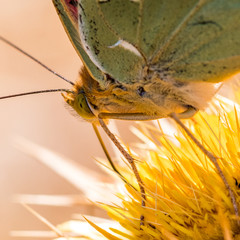 Butterfly on a flower in the Italy
