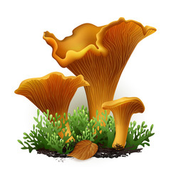 chanterelle vector mushrooms