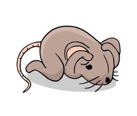 afraid rat illustration