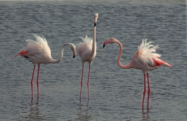 a group of flamingo