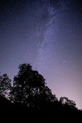 Trees and Milkyway