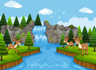 Deer in waterfall and woods scene