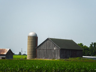Beautiful farm scene of a weathered old wood barn, shed and concrete silo with crop field in the foreground in Wisconsin and blue sky above.