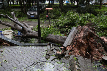 People walk past an uprooted tree after Typhoon Mangkhut hit Shenzhen