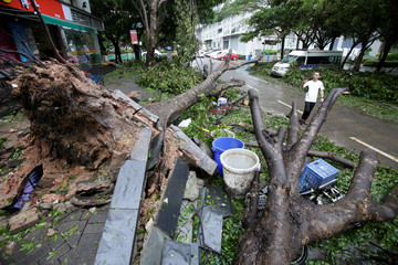Man walks past uprooted trees on a damaged street after Typhoon Mangkhut hit Shenzhen