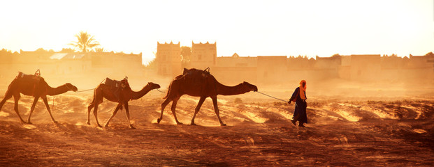Canvas Prints Morocco Caravan of camels in Sahara desert, Morocco