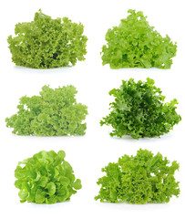 Fresh  lettuce leaves isolated on white background.