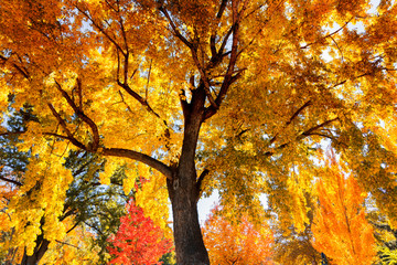 Tree with colorful autumn leaves