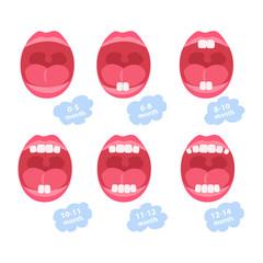 baby teeth. dentition age