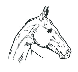 Portrait of an Arabian horse, drawn by hand, doodle style, engraving
