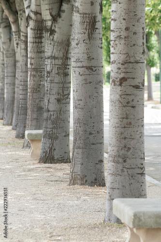 Rangée Darbres Er De Banc En Pierre Dans Un Parc Stock Photo And