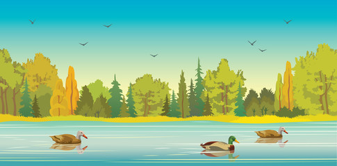 Autumn forest, lake and ducks.