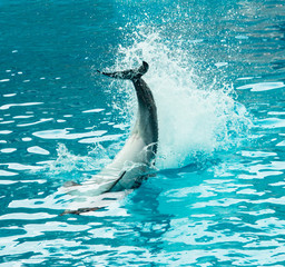 tail of a dolphin in water with a spray