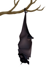 Sleeping realistic vector black fruit bat (Pteropus Alecto)