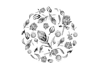 King protea flowers, buds and leaves items composed in circle shape. Protea, symbol of the South Africa, hand drawn in black and white.