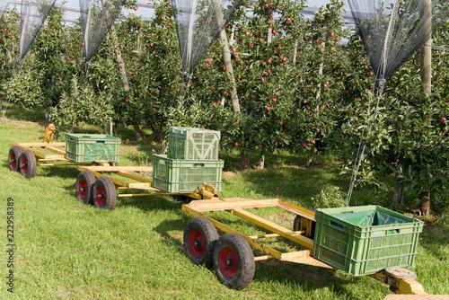 Äpfel, Apfelernte, Apfelkisten Landwirtschaft