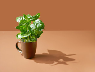 coffee plant in a brown cup