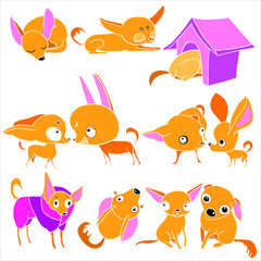 Set of illustrations, in vector, home pet
