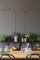 Plants on shelves against grey wall with molding in dining room interior with table. Real photo