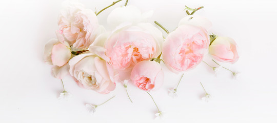 Festive flower English rose composition on the white background. Overhead top view, flat lay. Copy space. Birthday, Mother's, Valentines, Women's, Wedding Day concept. Panoramic Banner