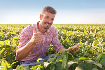Young farmer in field examining soybean corp. He is thumbs up.