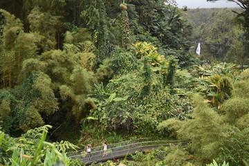 Akaka  Waterfalls Big Island Hawaii USA