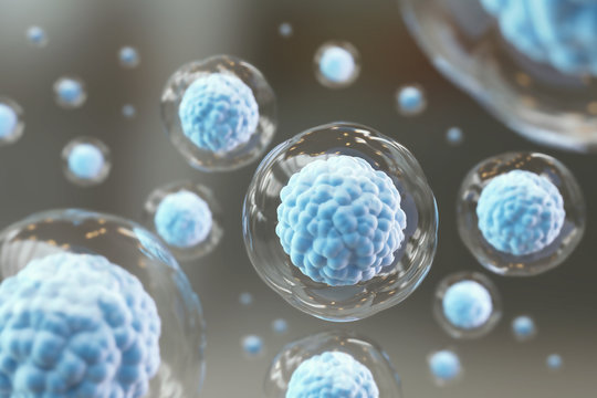Cellular Therapy and Regeneration, microscope of cell, Embryonic stem cells.