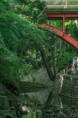 東京 夏の等々力渓谷の風景3