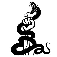 Black snake in hand on white background.