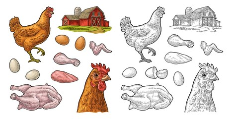 Set chicken. Whole, leg, wing, egg and farm. Vintage engraving