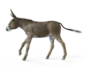 3d rendered illustration of a donkey