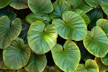 Green Leaf background. Green leaf texture.