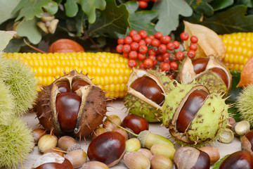 autumn fruits from chestnuts, acorns, maize and rowanberry