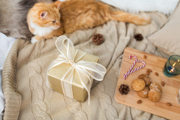 Fototapete - hygge and christmas concept - red tabby cat lying on blanket with gift, oatmeal cookies and candle at home