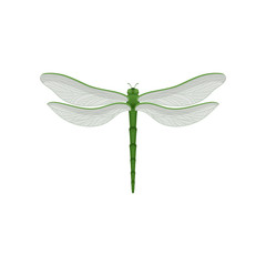 Flar vector icon of beautiful dragonfly with long green body and two pairs of large transparent wings. Fast-flying insect