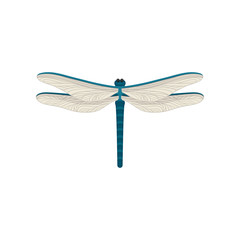 Small blue dragonfly with two pairs of large transparent wings. Flying insect. Flat vector design