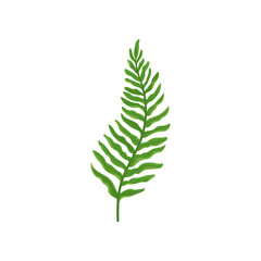 Green fern twig with leaves. Wild forest plant with bright green leaves. Natural flora. Flat vector design