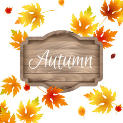 Autumn, fall design template, label. Red, yellow maple leaves isolated on white background. Falling autumn foliage, lettering, wood sign board, wooden frame for text or logo. Shop window decoration.