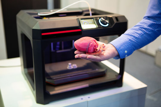 The cardiosurgeon demonstrates the heart printed on a 3d printer