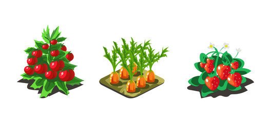 Garden vegetables and berries, carrot, tomato, strawberry, game user interface nature elements for video computer games vector Illustration